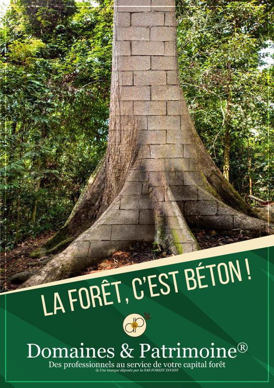 La forêt c'est du béton - Domaines et Patrimoine