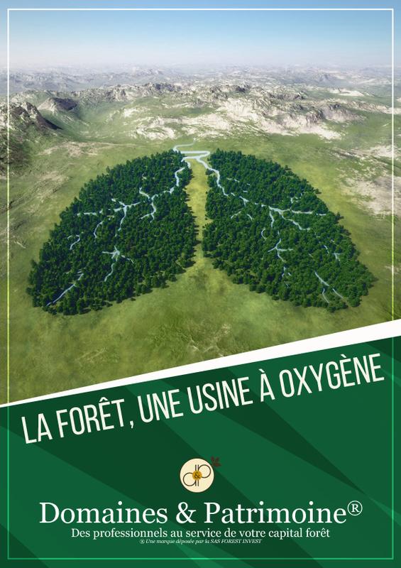 La forêt, une usine à oxygène - Domaines et Patrimoine