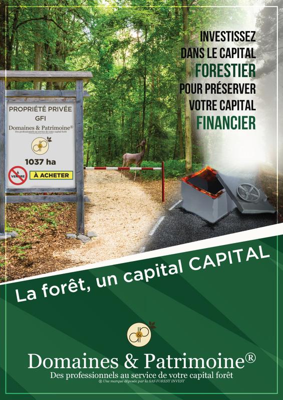 La forêt, un capital CAPITAL - Domaines et Patrimoine