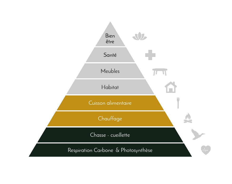 La matière première bois répond à des besoins essentiels - Domaines et Patrimoine